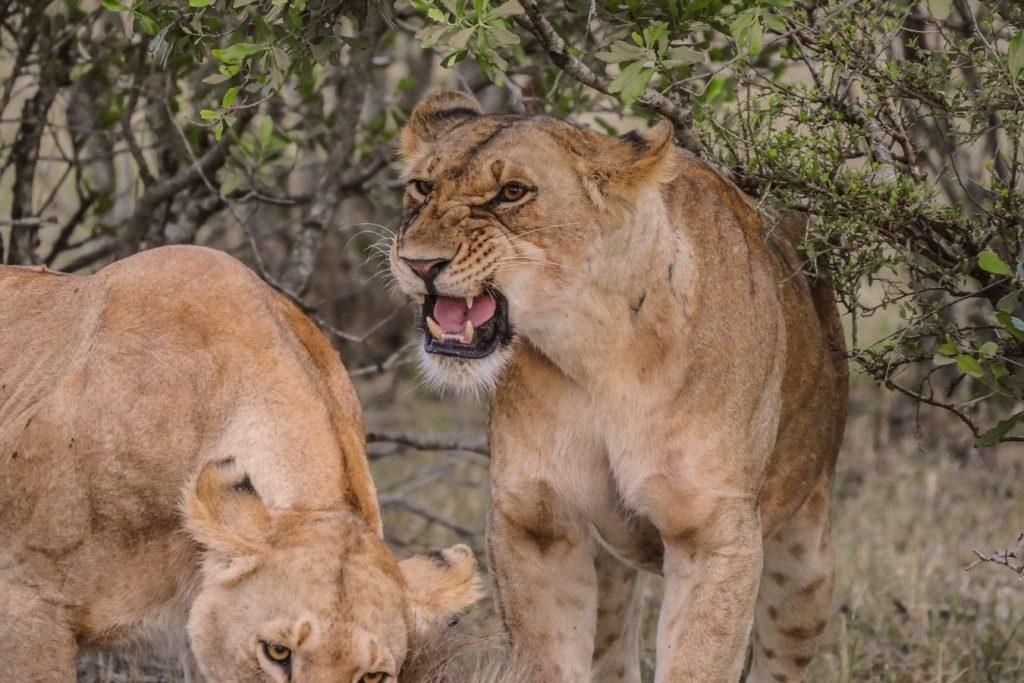 3 Days Masai Mara Safari Vacation East Africa Limited