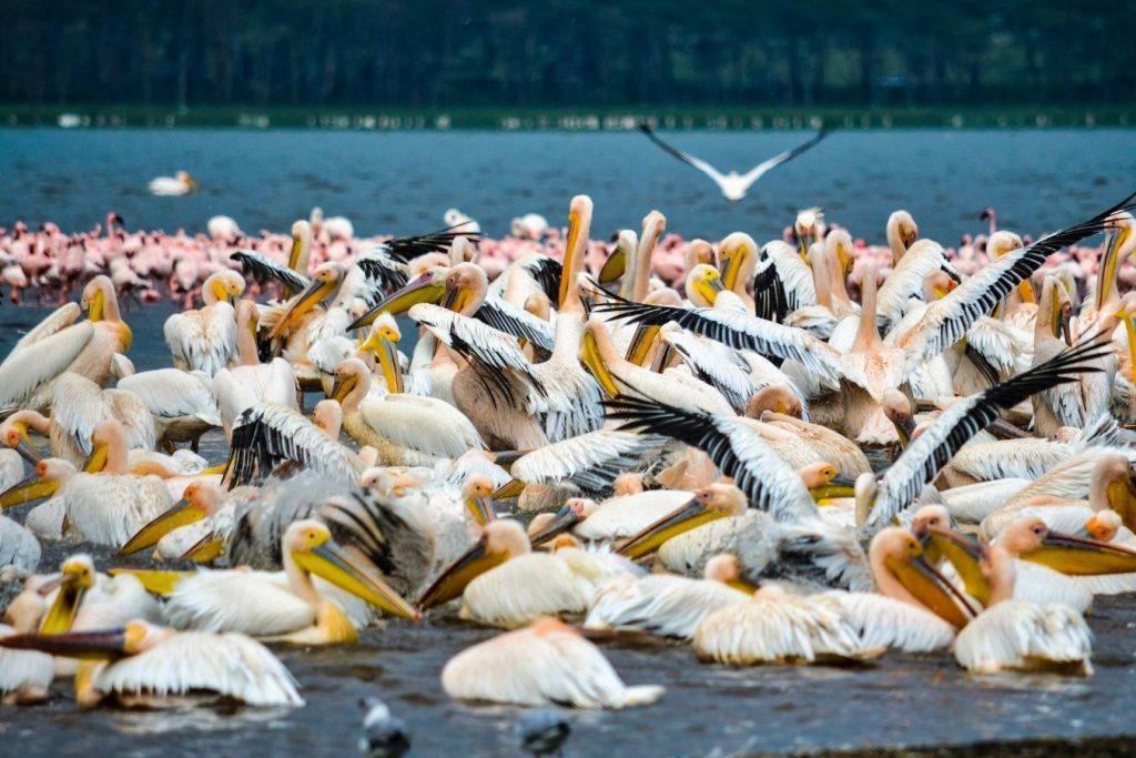 5 Days Masai Mara & Lake Nakuru Safari Vacation East Africa Limited