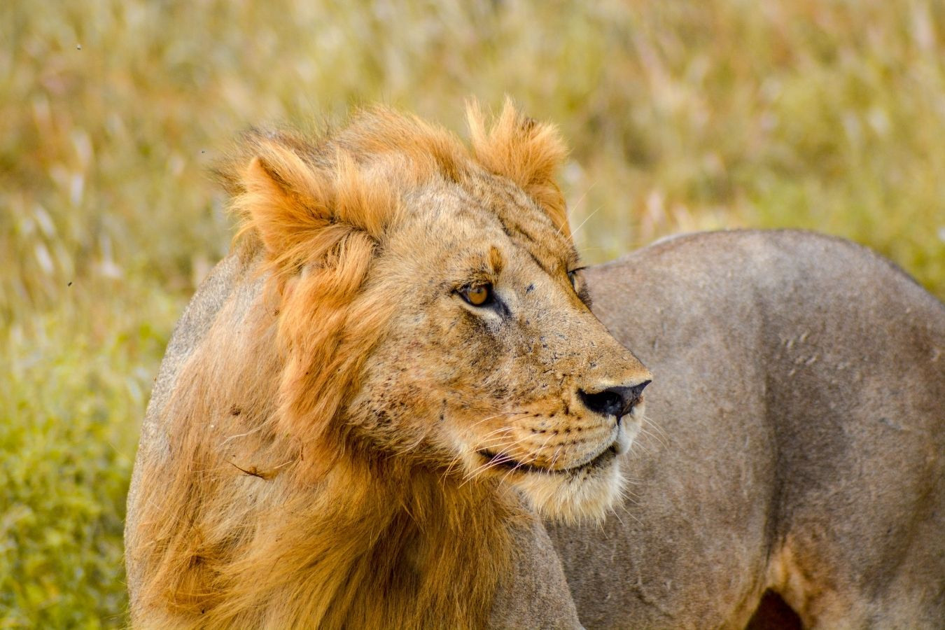 6 Days Amboseli and Tsavo Safari Vacation East Africa Limited (2)