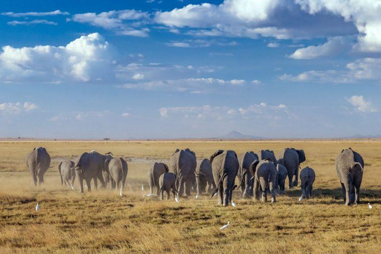7 Days Kenya Safari Lake Nakuru, Masai Mara, Naivasha and Amboseli National Park Vacation East Africa Limited