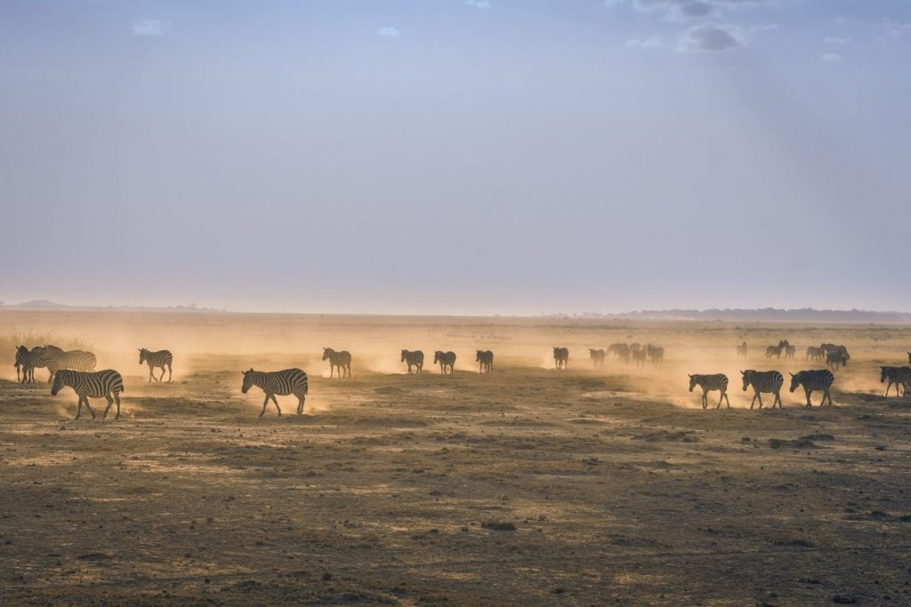 Amboseli Day Trip Vacation East Africa Limited