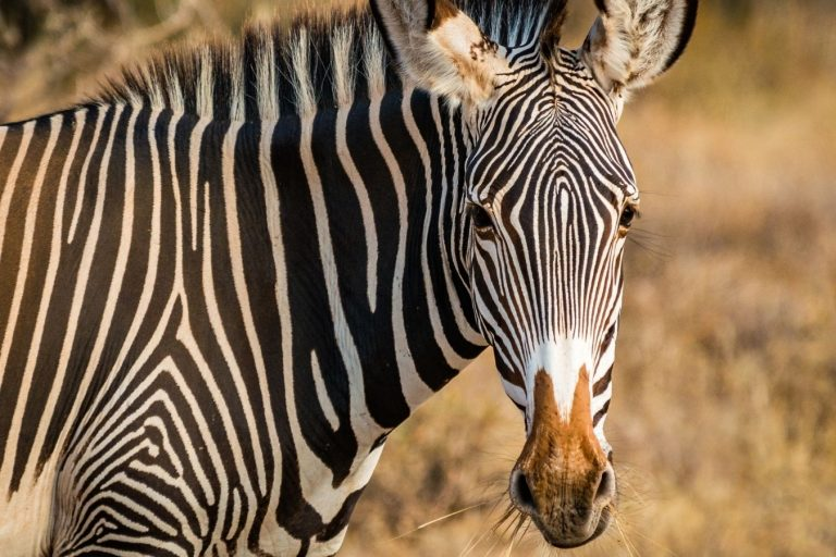 Samburu Fly-in Safari Vacation East Africa Limited (2)
