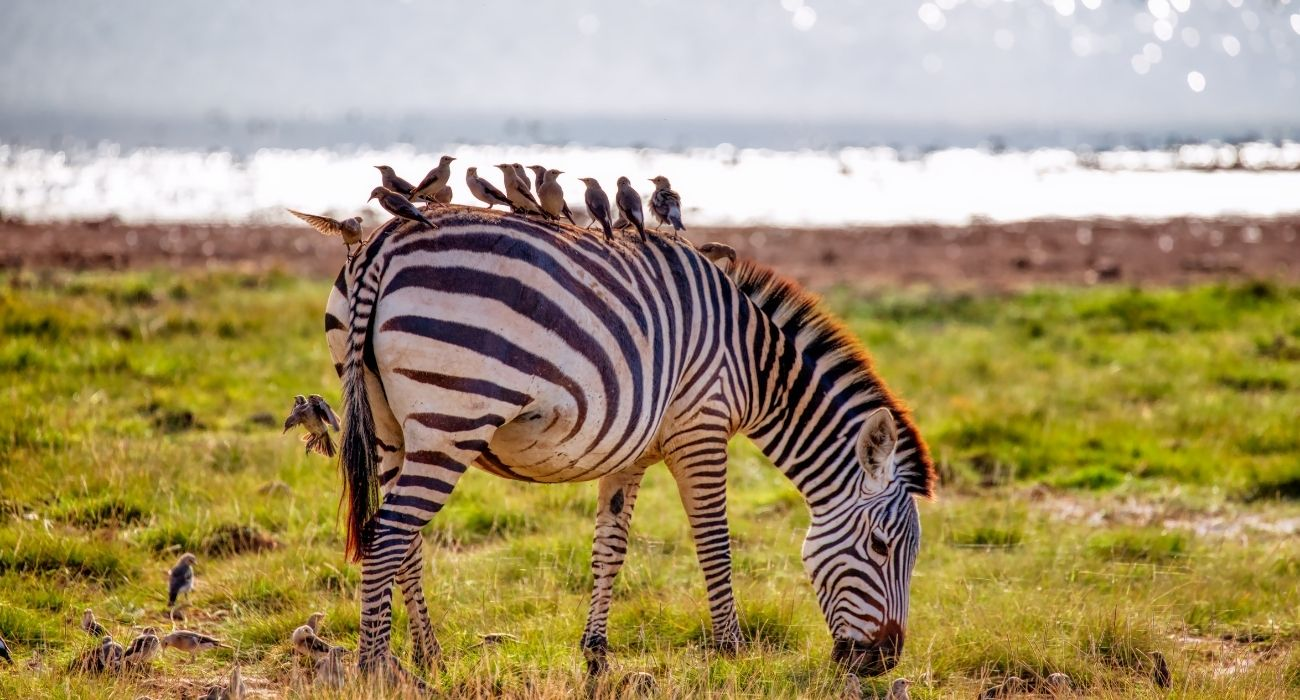 Amboseli national Park Vacation East Africa Limited