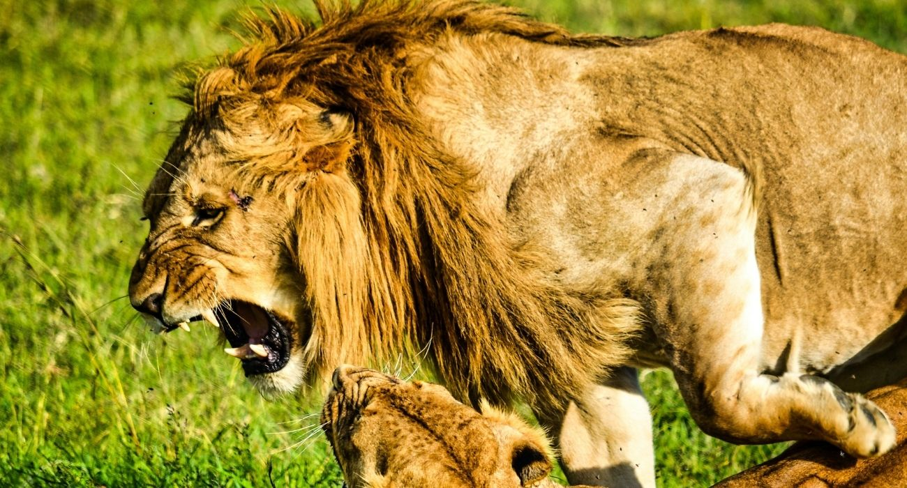 Masai Mara National Reserve Vacation East Africa Limited